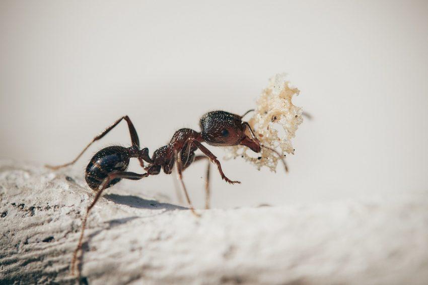 La formica è povera, la cicala è ricca. O no?